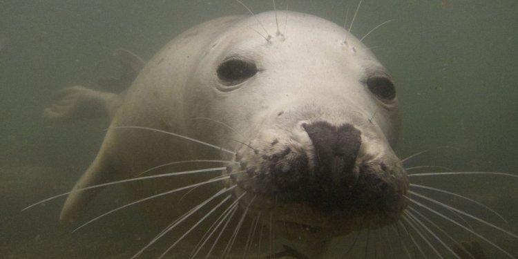 Seal in the Farnes Islands