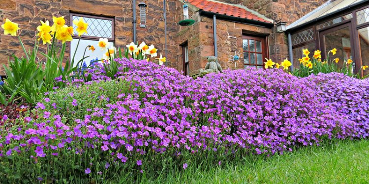 Spring Flowers at Fairfield Bed and Breakfast in Northumberland