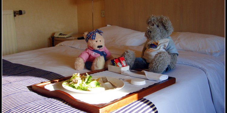 Valentines Day, bear-style in a hotel in Northumberland