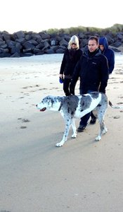Dogs enjoy on Northumberland Beaches All Year Round