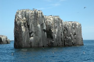 Farne Islands Pinnacles
