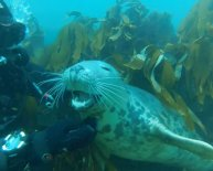 Diving Farne Islands